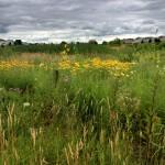 Suburban Vista – July 2013