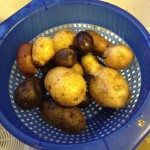Potatoes to Grow and Eat